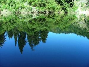 Russian River Reflection (Highland)