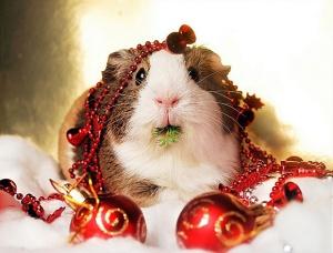 christmas critter