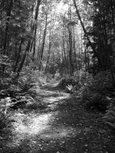 March 2008 forestlightpath