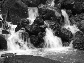 april-2010-carson-falls-072