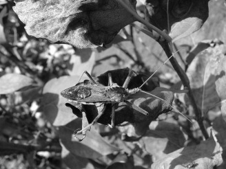 Beetle at Monticello