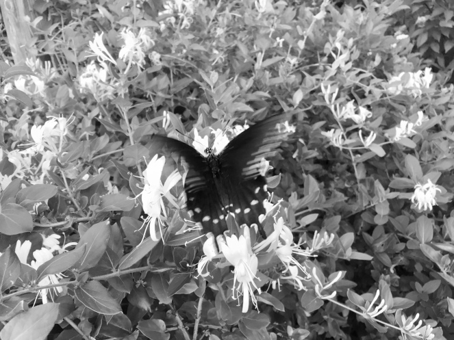A-flutter by the path