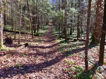 Smoky Mt Trail (Highland)