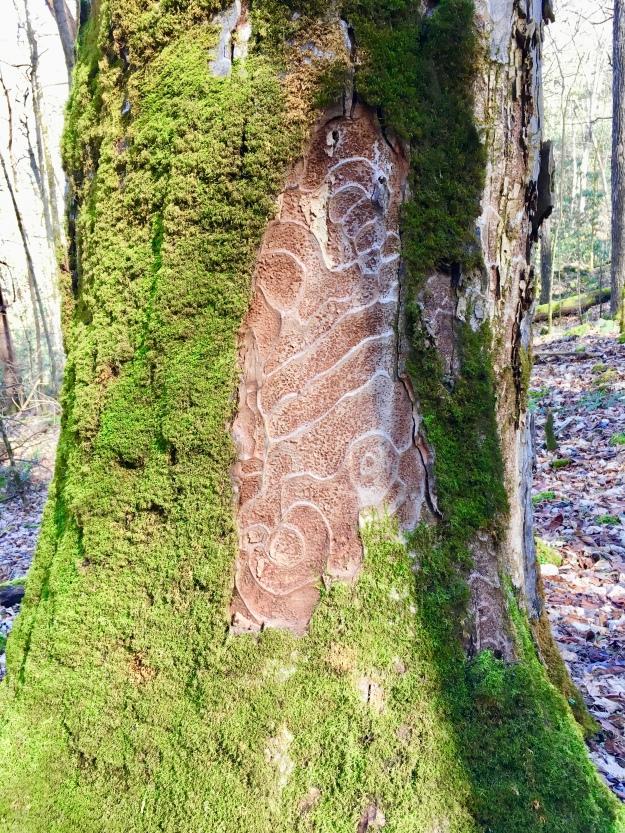 Nature's Graffiti (Highland)