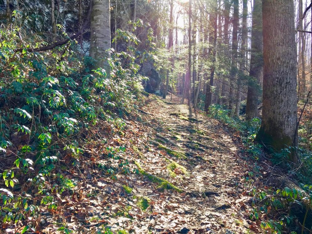 Rootlight Trail (Highland)