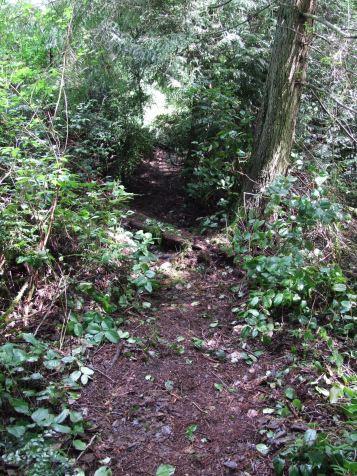 One trail I cleared