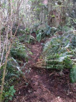 Pathfinder trail