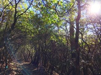 Tree Tunnel3