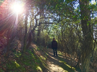 Tree Tunnel4